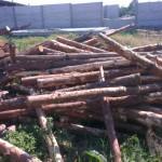 Дрова сосновые в Одессе